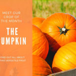 Crop of the Month: The Pumpkin